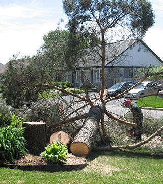 Abbatage d'arbre