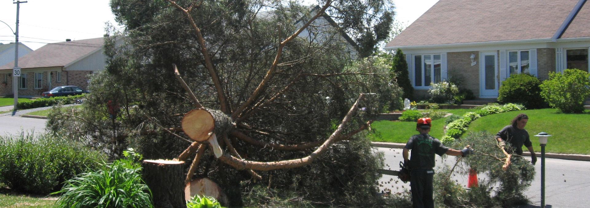 abattage arbre a quebec. Black Bedroom Furniture Sets. Home Design Ideas